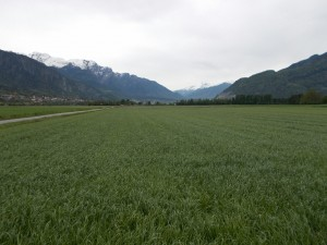 A large green grain field with a village and mountains in the background.